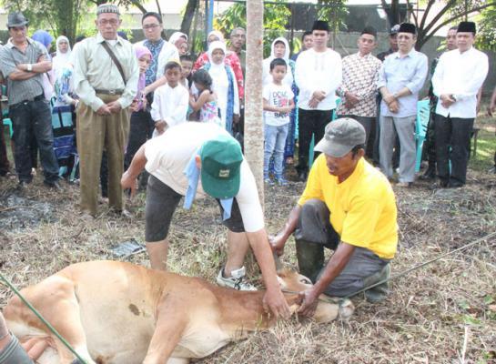 Medan Selayang Salurkan Daging Kurban Untuk 1.200 Warga Kurang Mampu